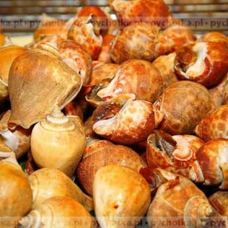 Przystawka ze ślimaków